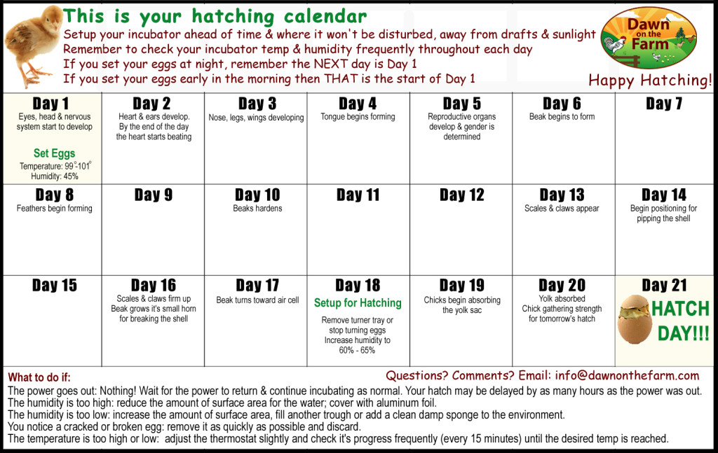 Chicken Hatching Calendar